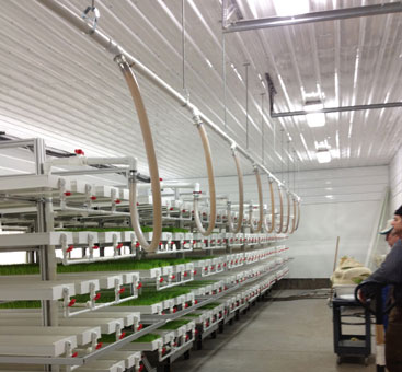 commercial hydroponic fodder system
