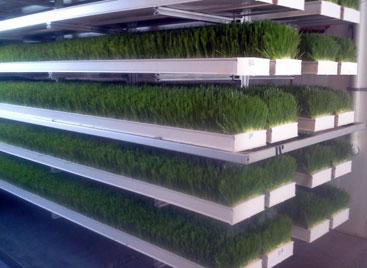 FodderTech fodder sprouting system