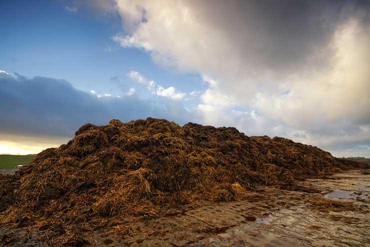big pile of manure