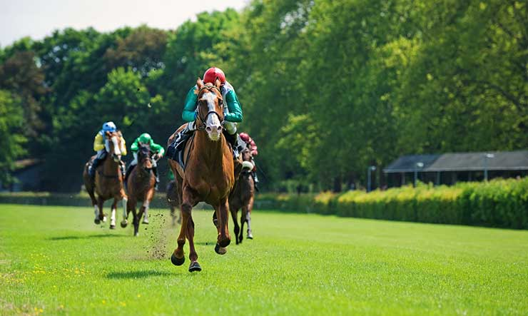 horse race on grass track